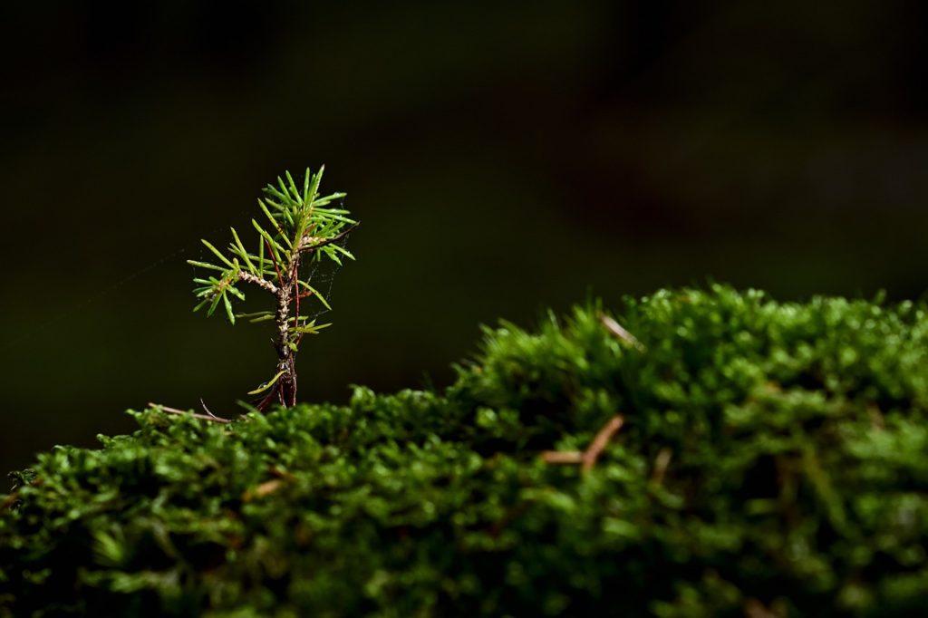 tree, moss, seedling-5803607.jpg